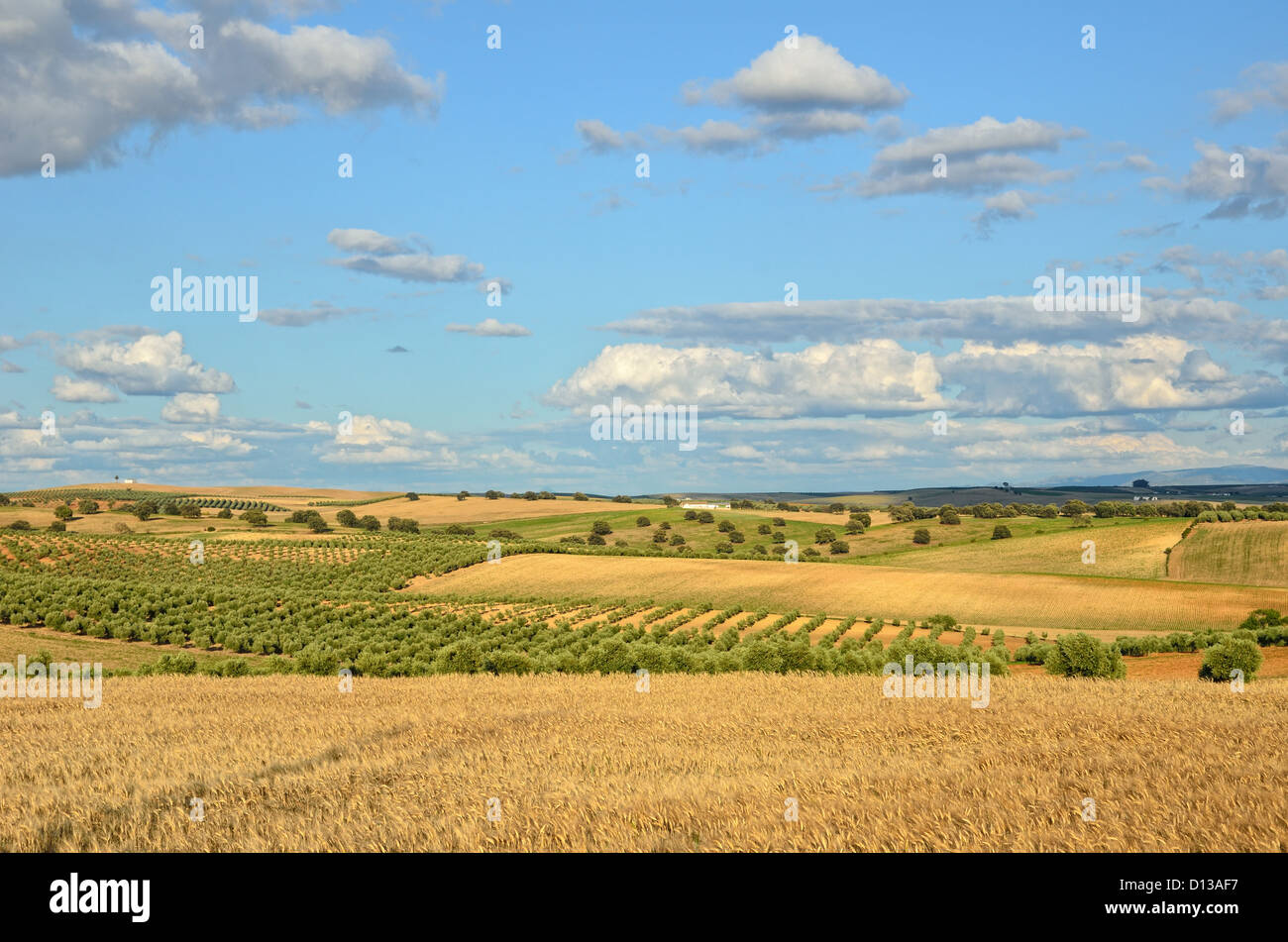 Spanish agricultural landscape in spring Stock Photo