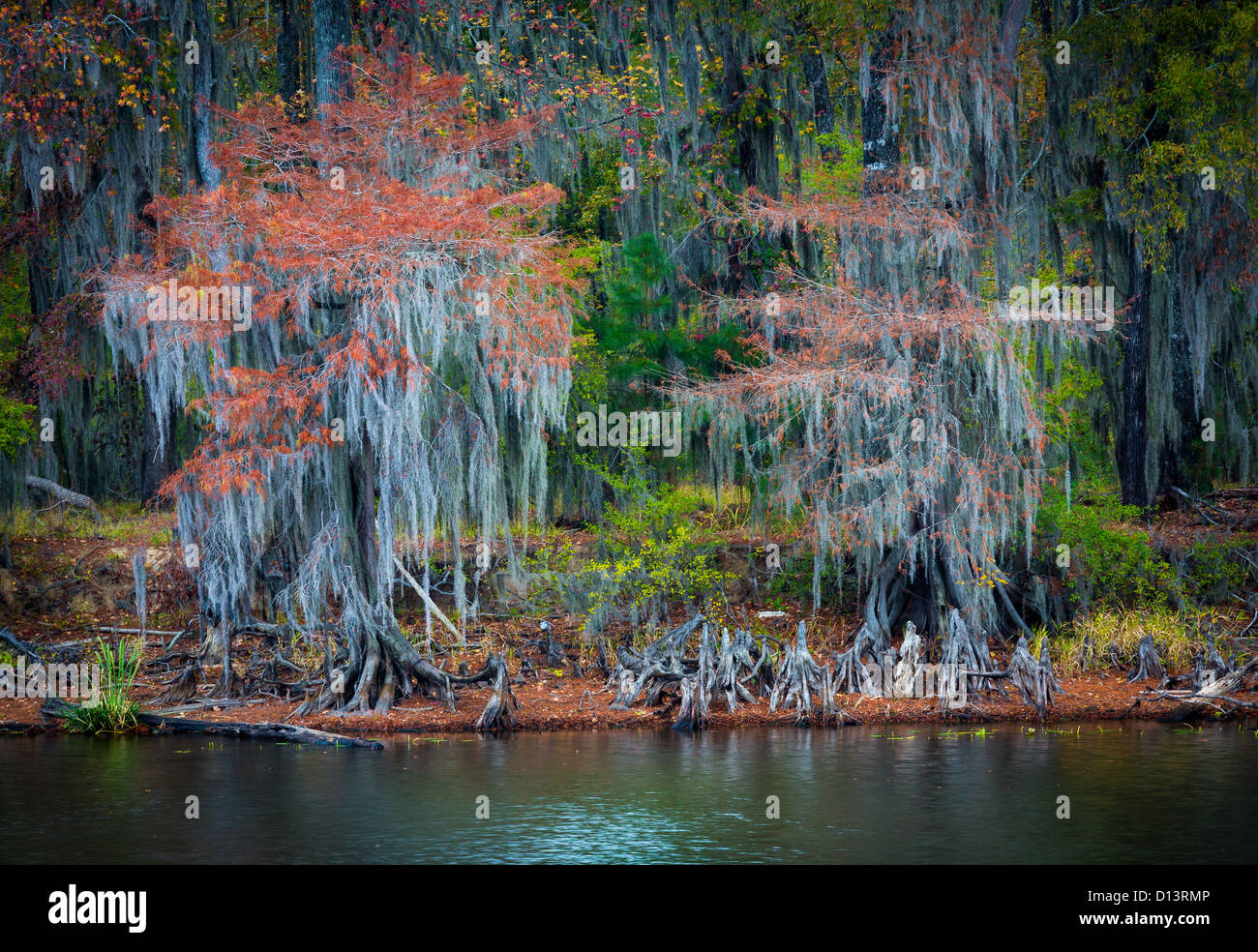 Trees in fall color at Caddo Lake State Park, Texas - Stock Image