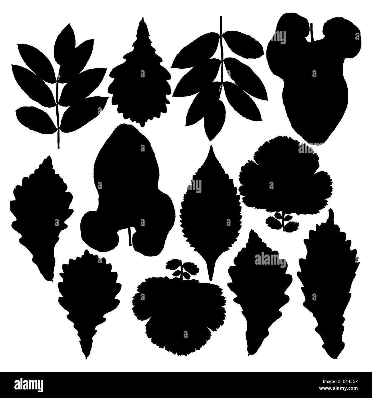 Set of silhouettes of leaves. Oak, mountain ash, birch, aspen, poplar and hawthorn. Isolated on white. Vector illustrations. - Stock Image