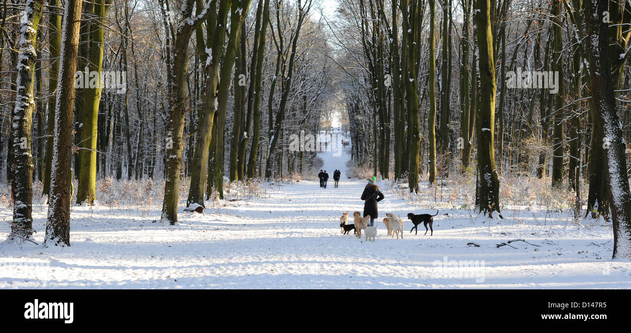 People walk their dogs through snow at Volkspark in Hamburg, Germany, 06 December 2012. Photo: Angelika Warmuth - Stock Image