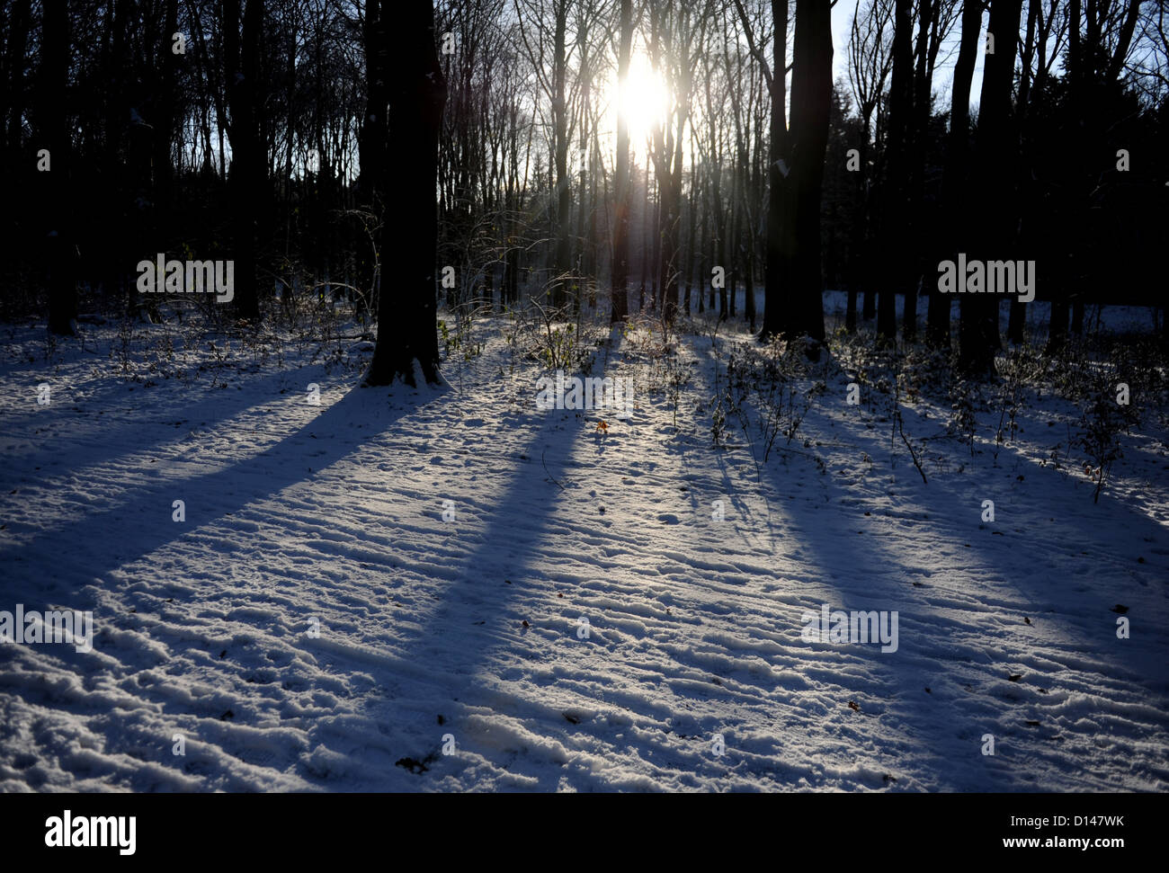 The sun iluminates the snow at Volkspark in Hamburg, Germany, 06 December 2012. Photo: Angelika Warmuth - Stock Image