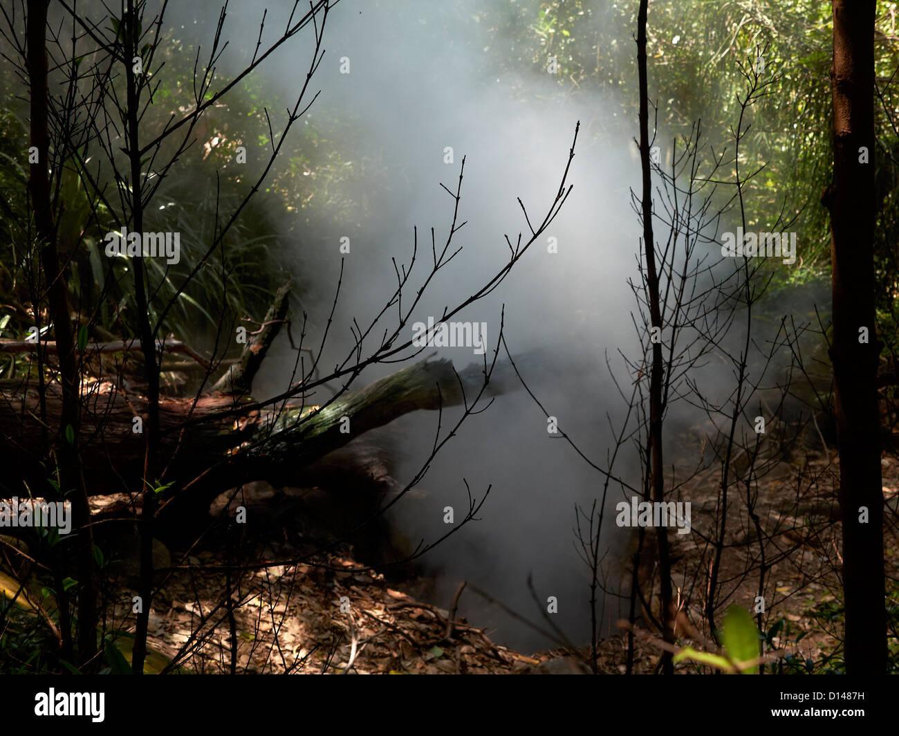 sulfurous and stinking steam gases; tropical rainforest; Las Pailas; Ricòn de la Vieja National Park - Stock Image