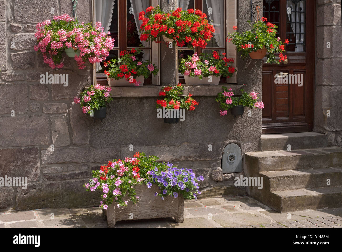 summer plant pots and hanging baskets full of flowers mostly geraniums at front doorway and steps of house. - Stock Image