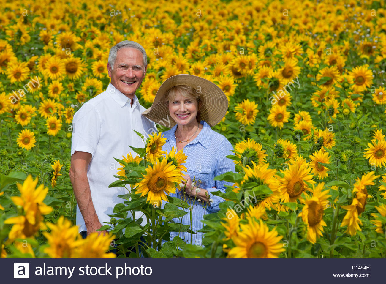 Portrait of smiling couple among sunflowers in sunny meadow - Stock Image
