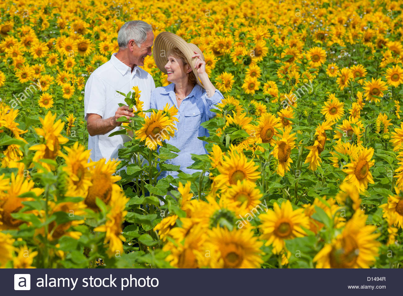 Smiling couple among sunflowers in sunny meadow - Stock Image