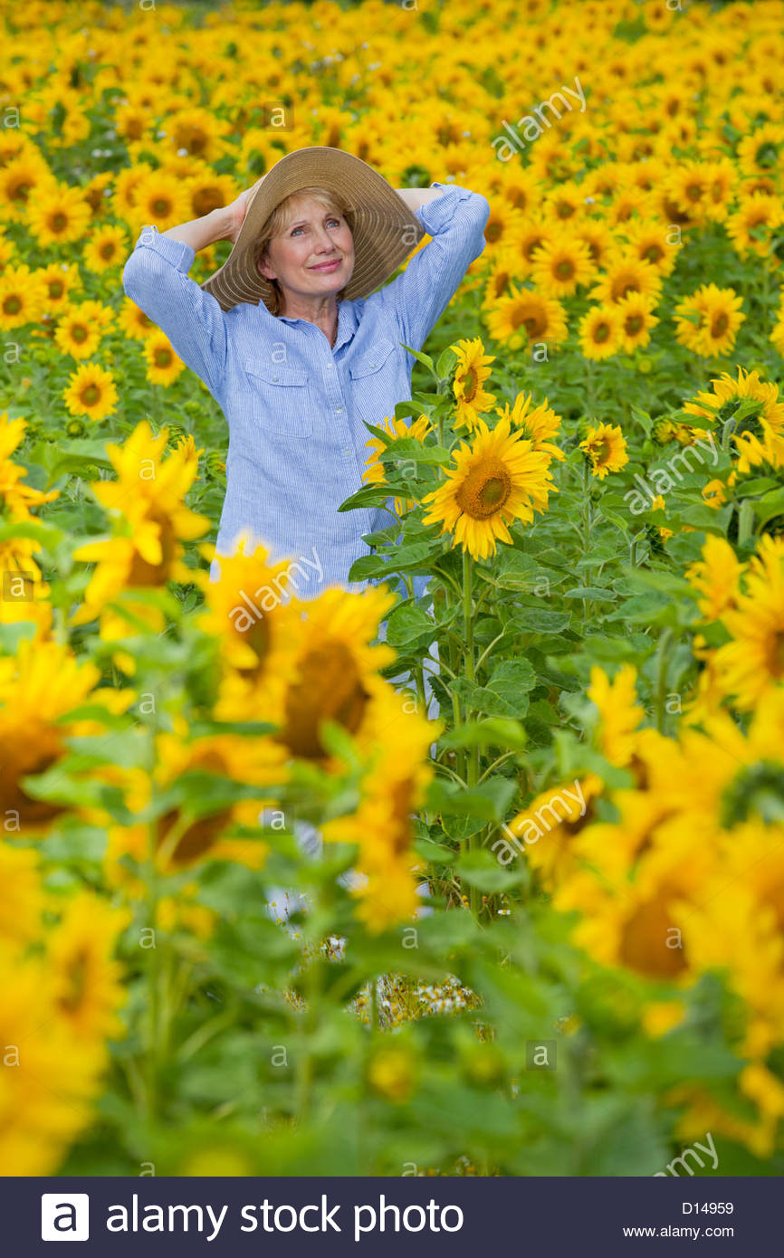 Smiling woman standing with hands behind head among sunflowers in sunny meadow - Stock Image