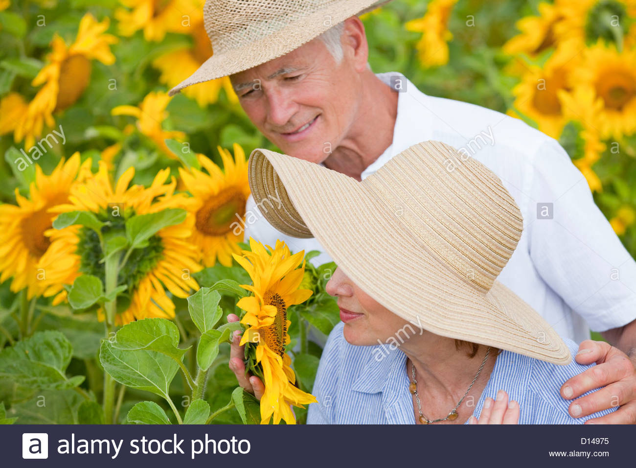 Couple smelling sunflowers in sunny meadow - Stock Image