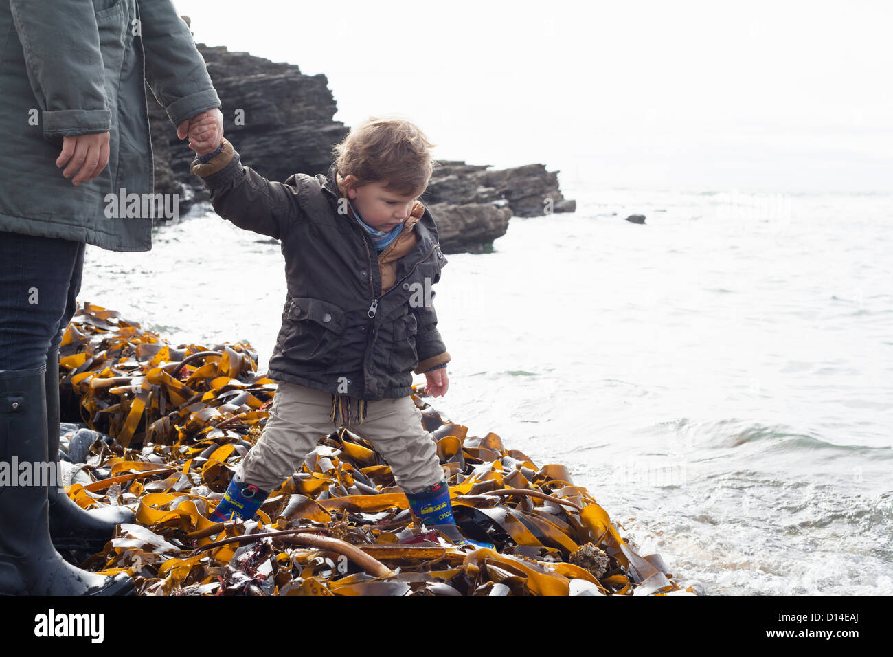 Father and son playing in kelp on beach - Stock Image