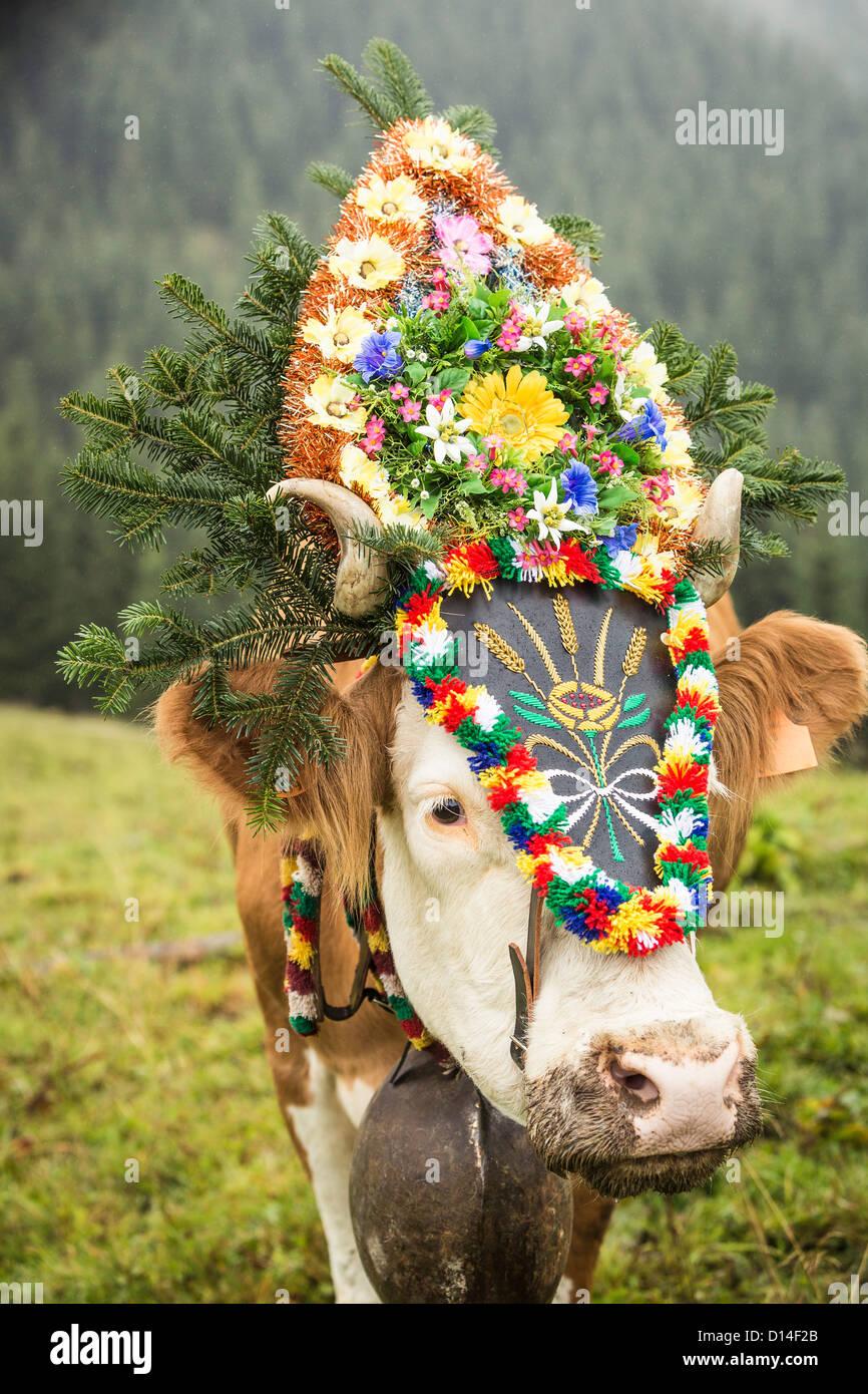 Cow wearing headdress in grassy field - Stock Image