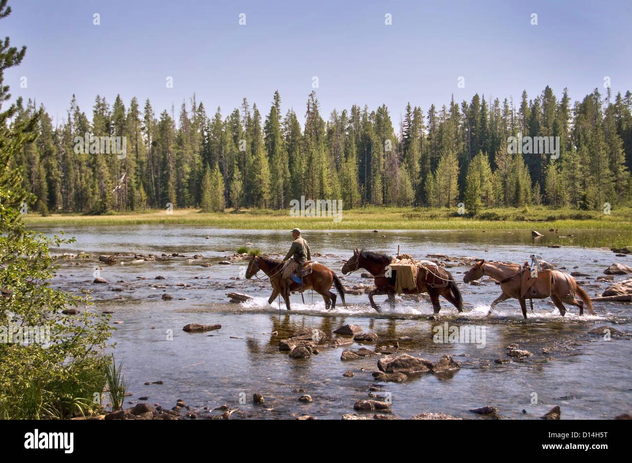 Three horses crossing String Lake - Grand Teton National Park, Wyoming, USA Stock Photo