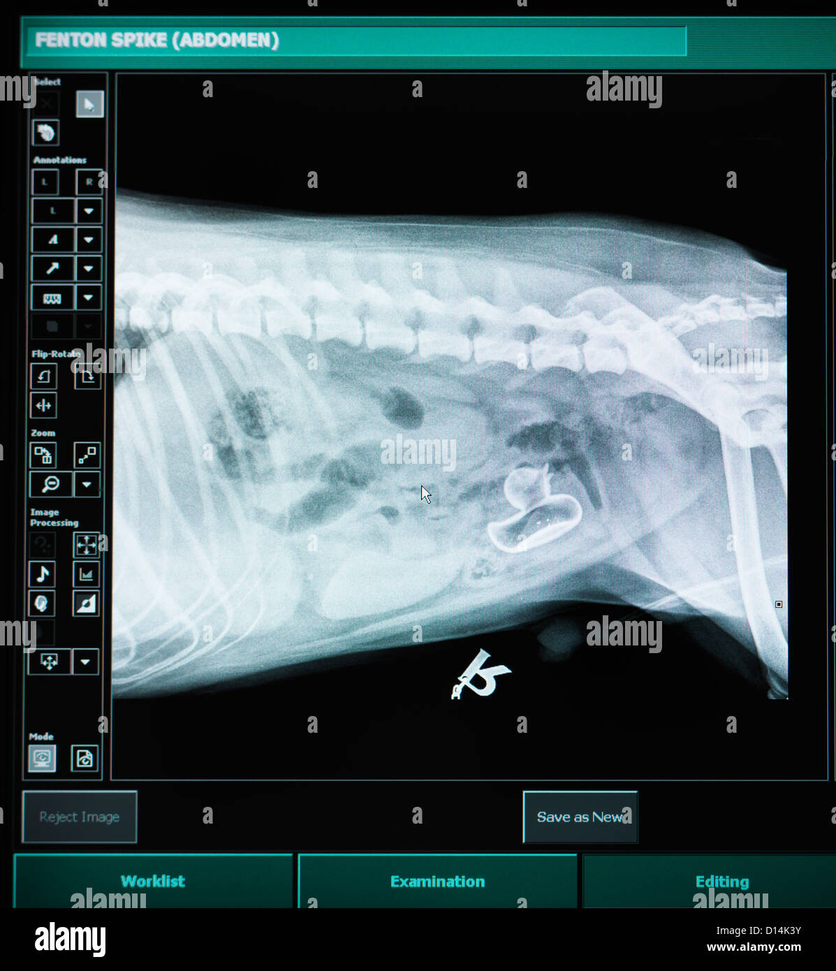 X-ray of dog with swallowed plastic duck - Stock Image
