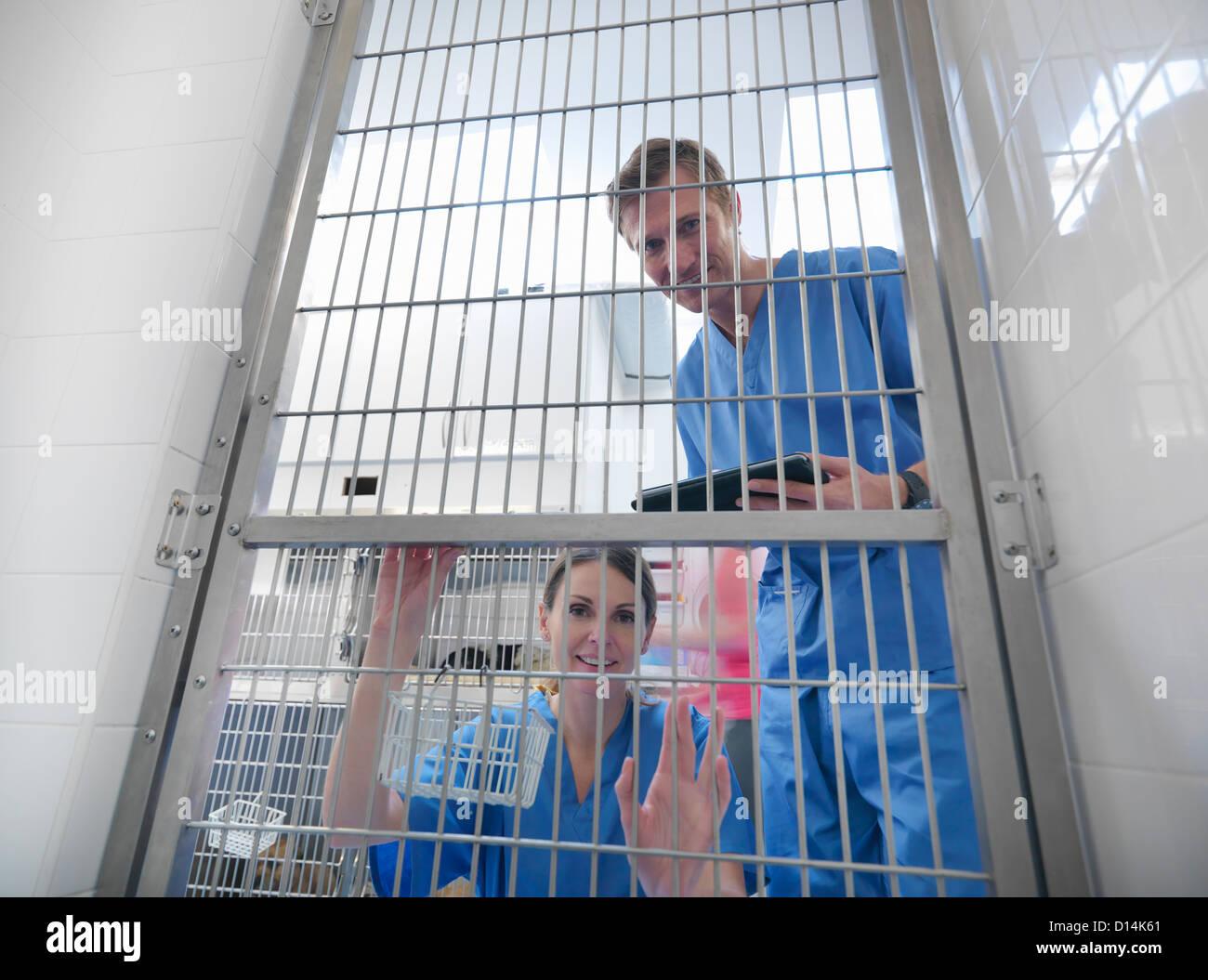 Veterinarians peering through cage door - Stock Image