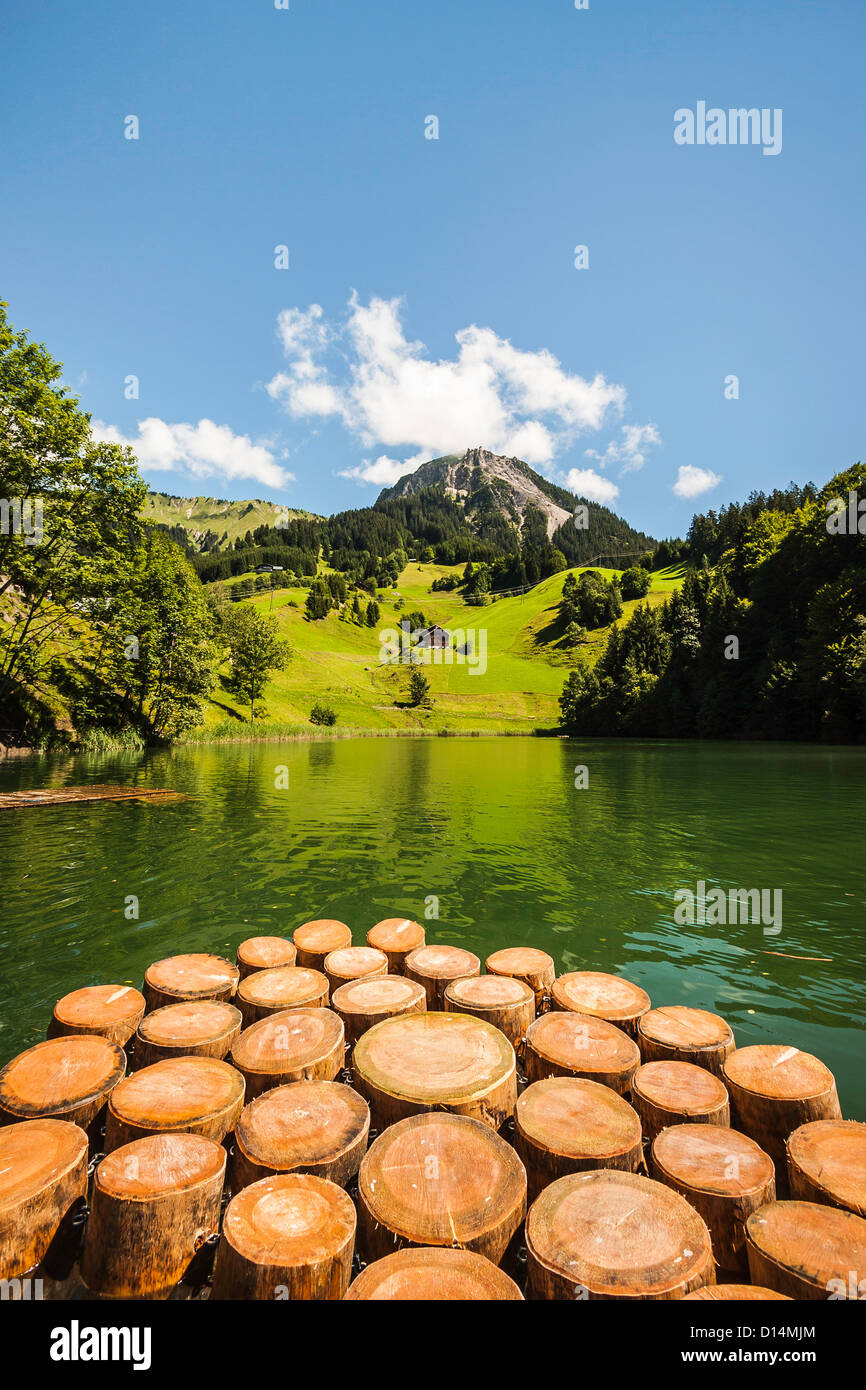 Tree stumps in still rural lake Stock Photo