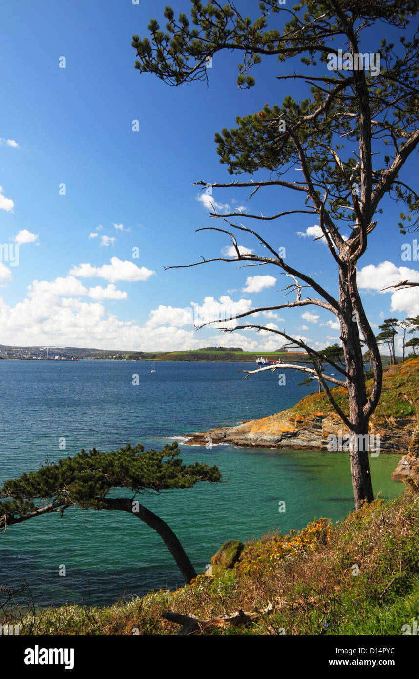 Cornish coastal view with blue sea and trees. - Stock Image