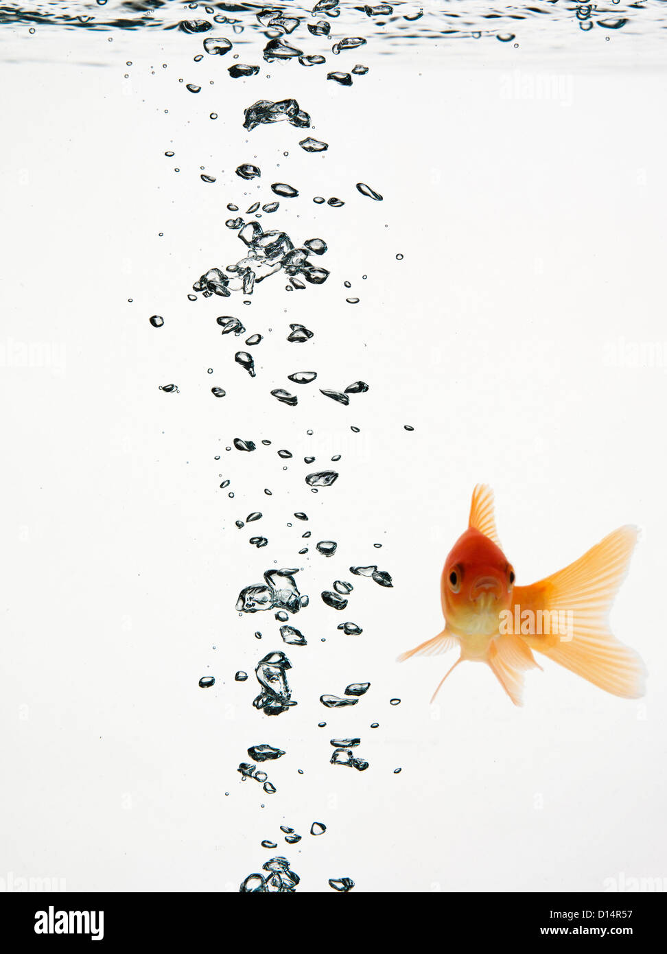 Fish swimming with bubbles water - Stock Image