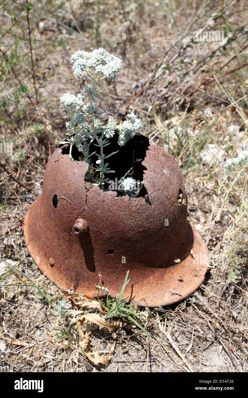 Old rusted helmet protecting flowers - Stock Image