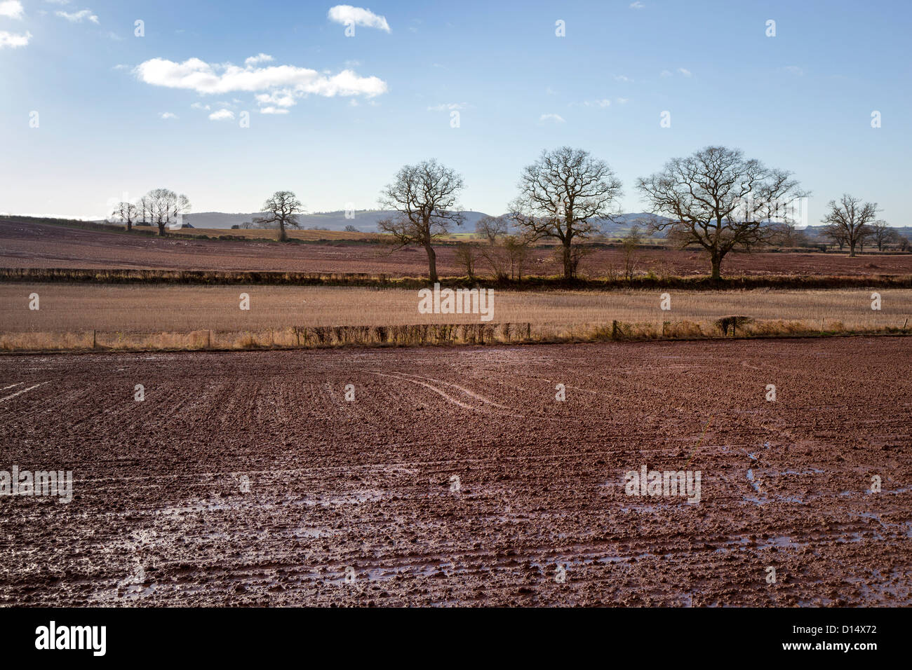 Bare winter fields and trees with waterlogged muddy ground, Hereford, UK Stock Photo