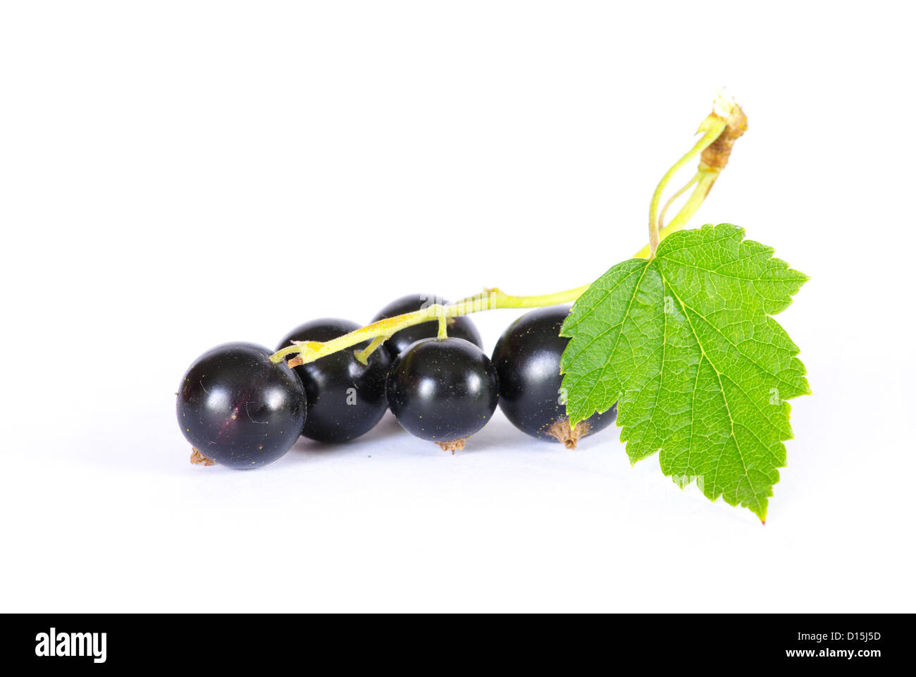 branch of black currant fruits isolated on white background Stock Photo