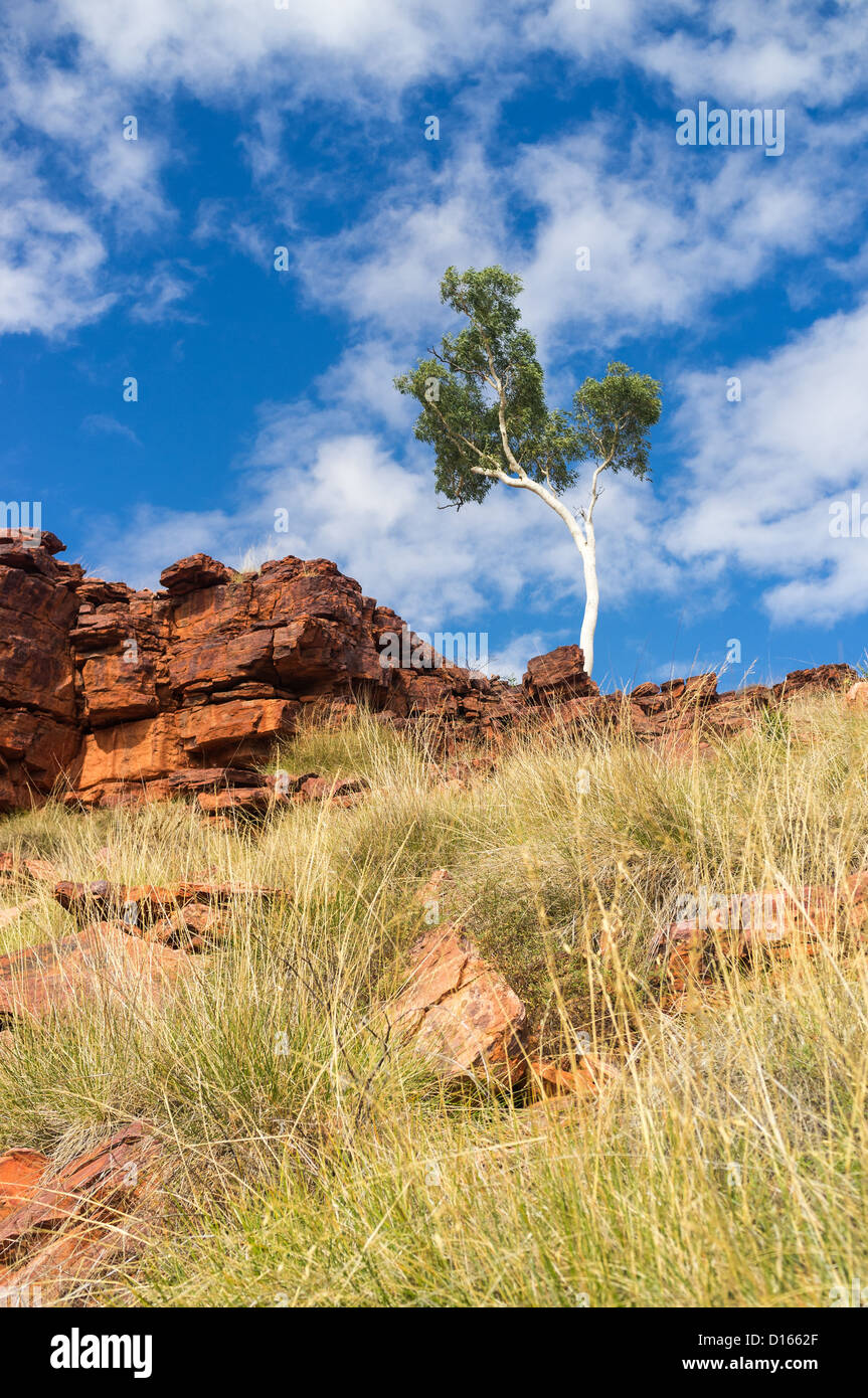 Lone ghost gum in Trephina Gorge in the East MacDonnell Ranges near Alice Springs, Northern Territory in the Red - Stock Image