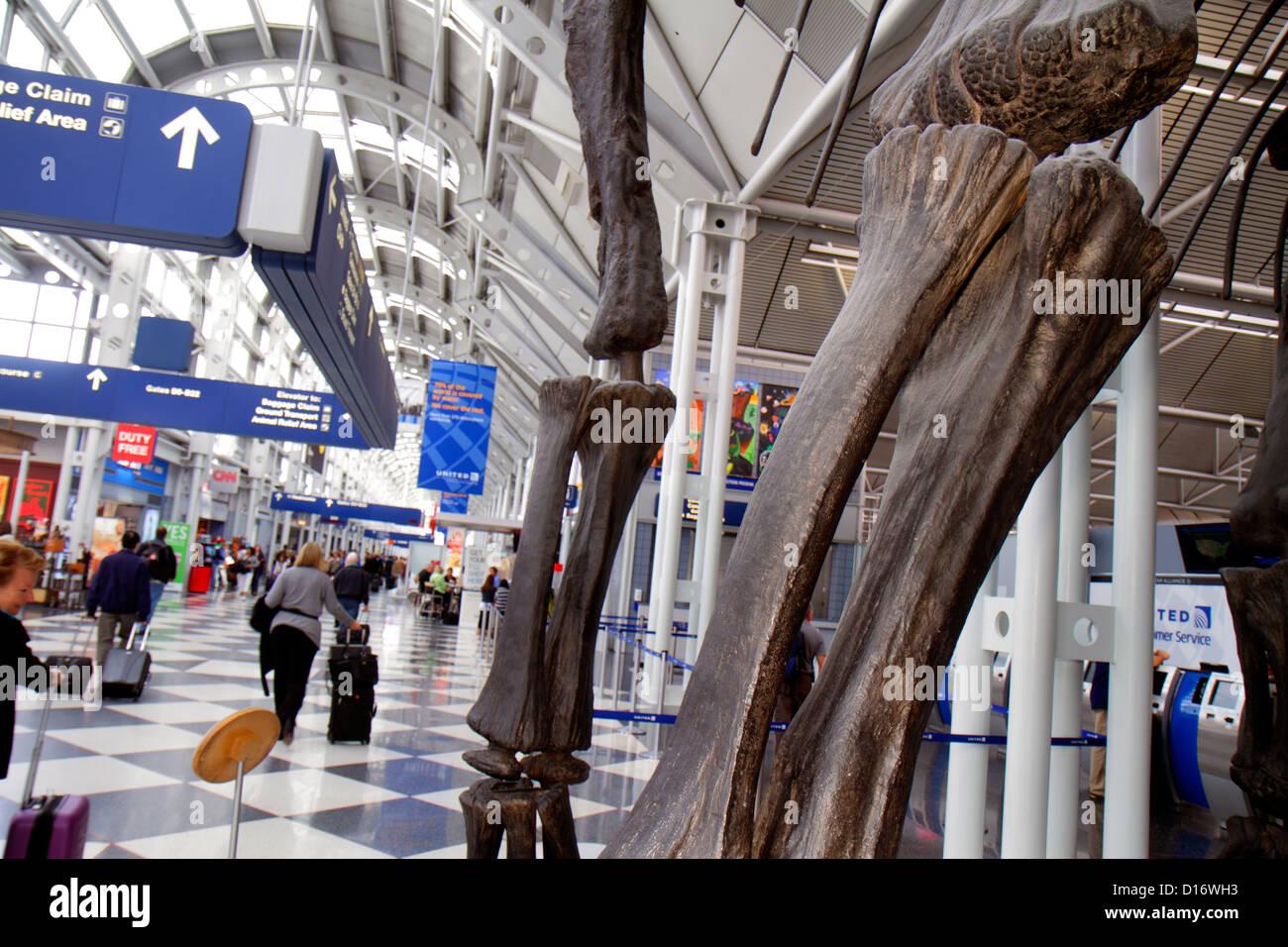 Chicago Illinois O'Hare International Airport ORD concourse gate area mounted dinosaur bones replica Brachiosaurus - Stock Image