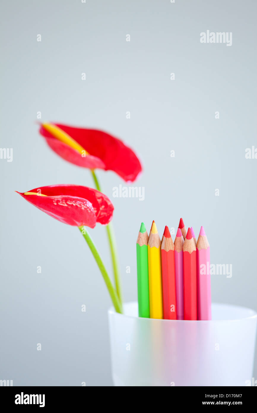 Flamingo Lily flowers and colored pencils in a cup Stock Photo ...