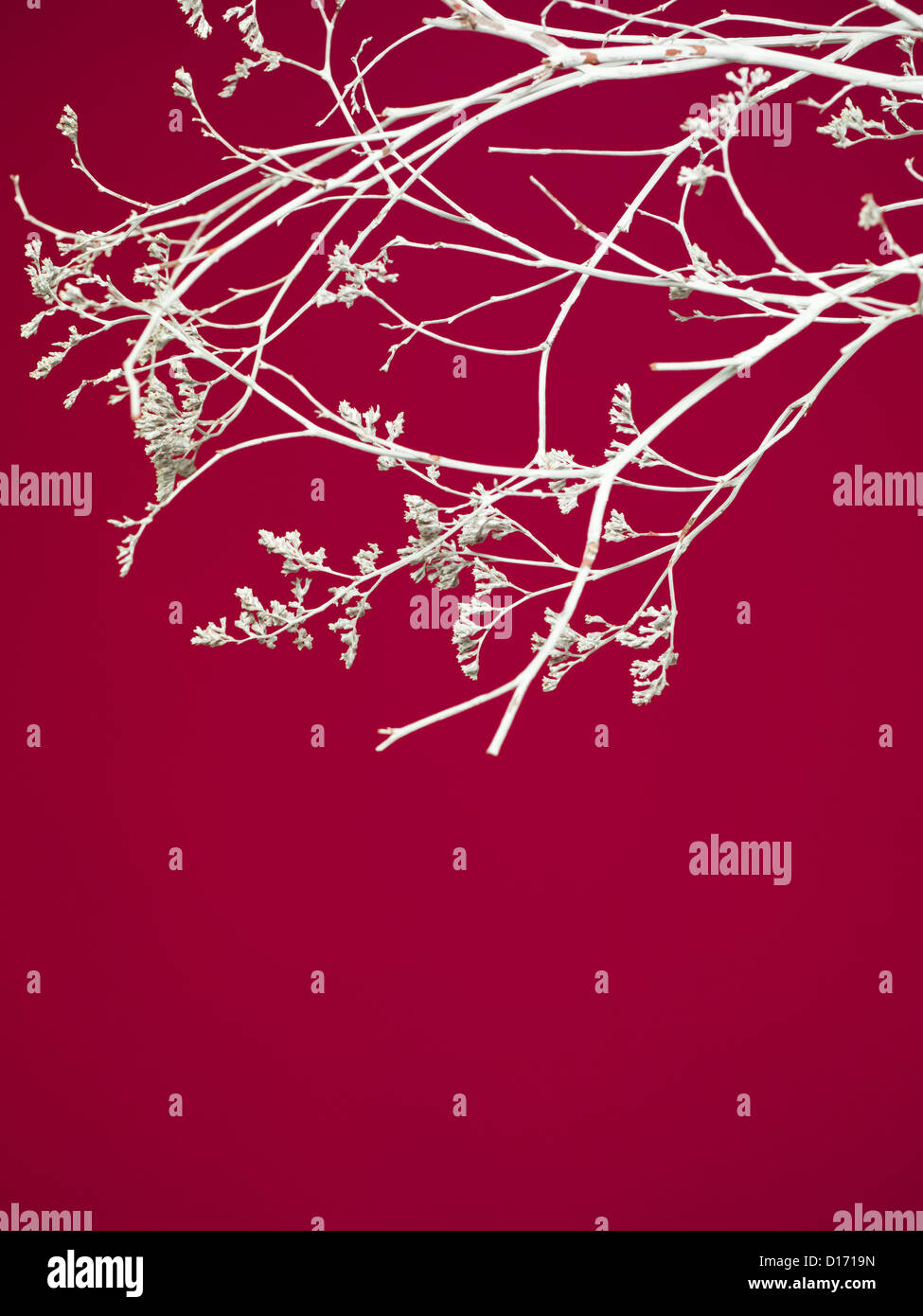 Closeup Of Interesting Curved Painted Branches With White Flowers On Stock Photo Alamy