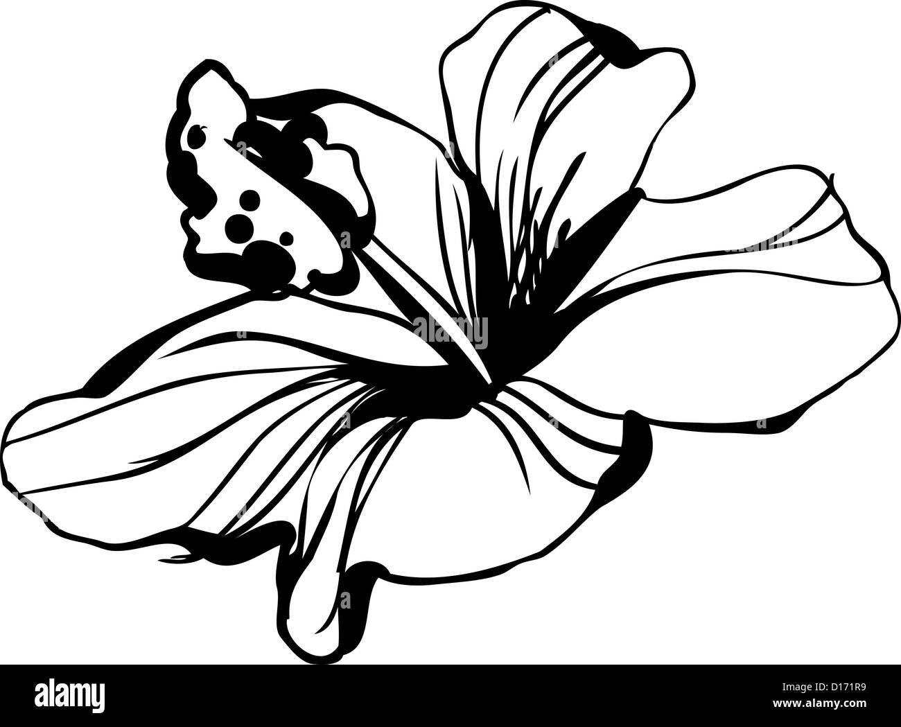 A hibiscus plant black and white stock photos images alamy a sketch blossoming hibiscus a flower bud stock image izmirmasajfo