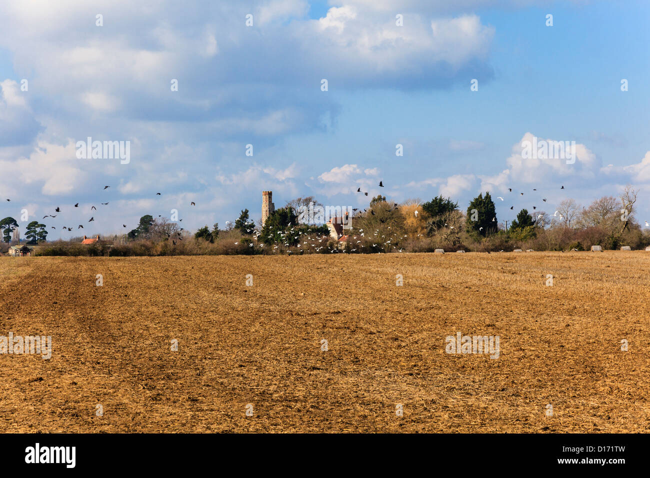 birds-take-flight-from-a-newley-tilled-field-with-the-pretty-village-D171TW.jpg?profile=RESIZE_400x