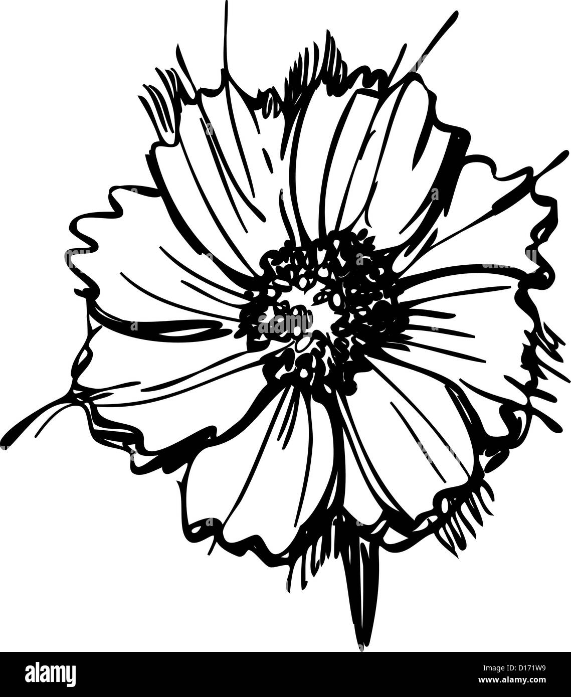 a sketch stock photos a sketch stock images alamy Walmart Etch a Sketch a sketch wild flower resembling a daisy stock image