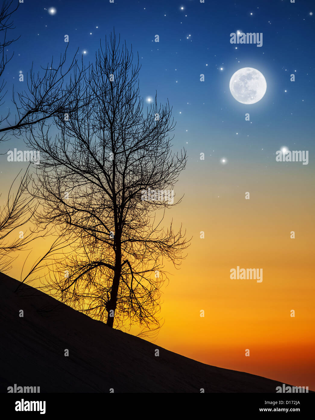 Picture of big dry tree in moonlight, silhouette of wood on hill on dark night background, bright moon with shining - Stock Image