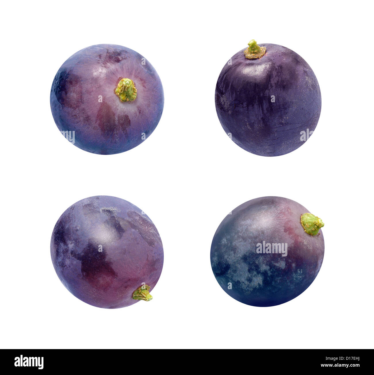 Concord Grapes Isolated on a white background - Stock Image