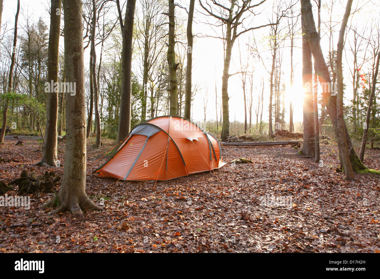 Tent pitched in autumn forest - Stock Image