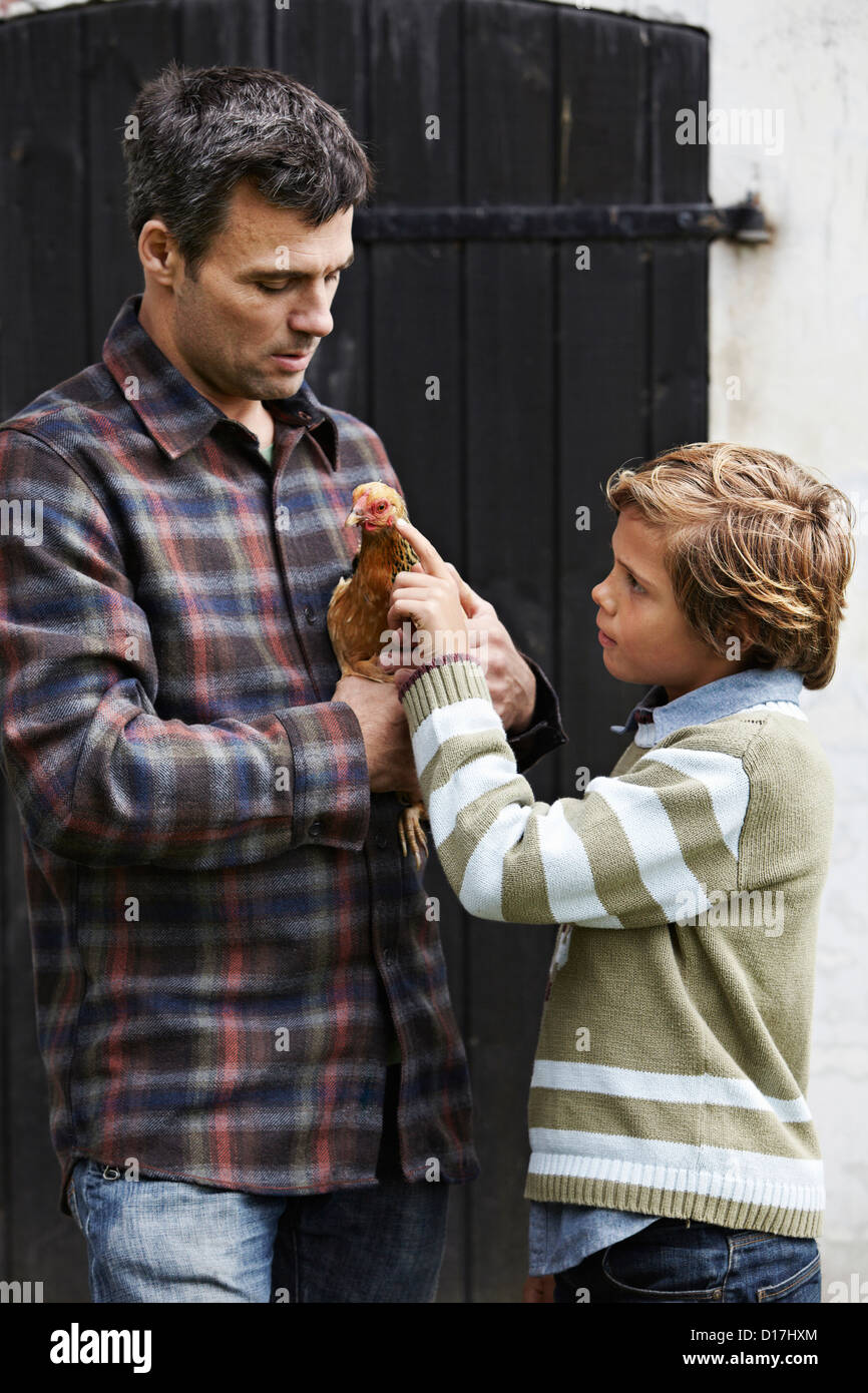 Father and son examining chicken - Stock Image