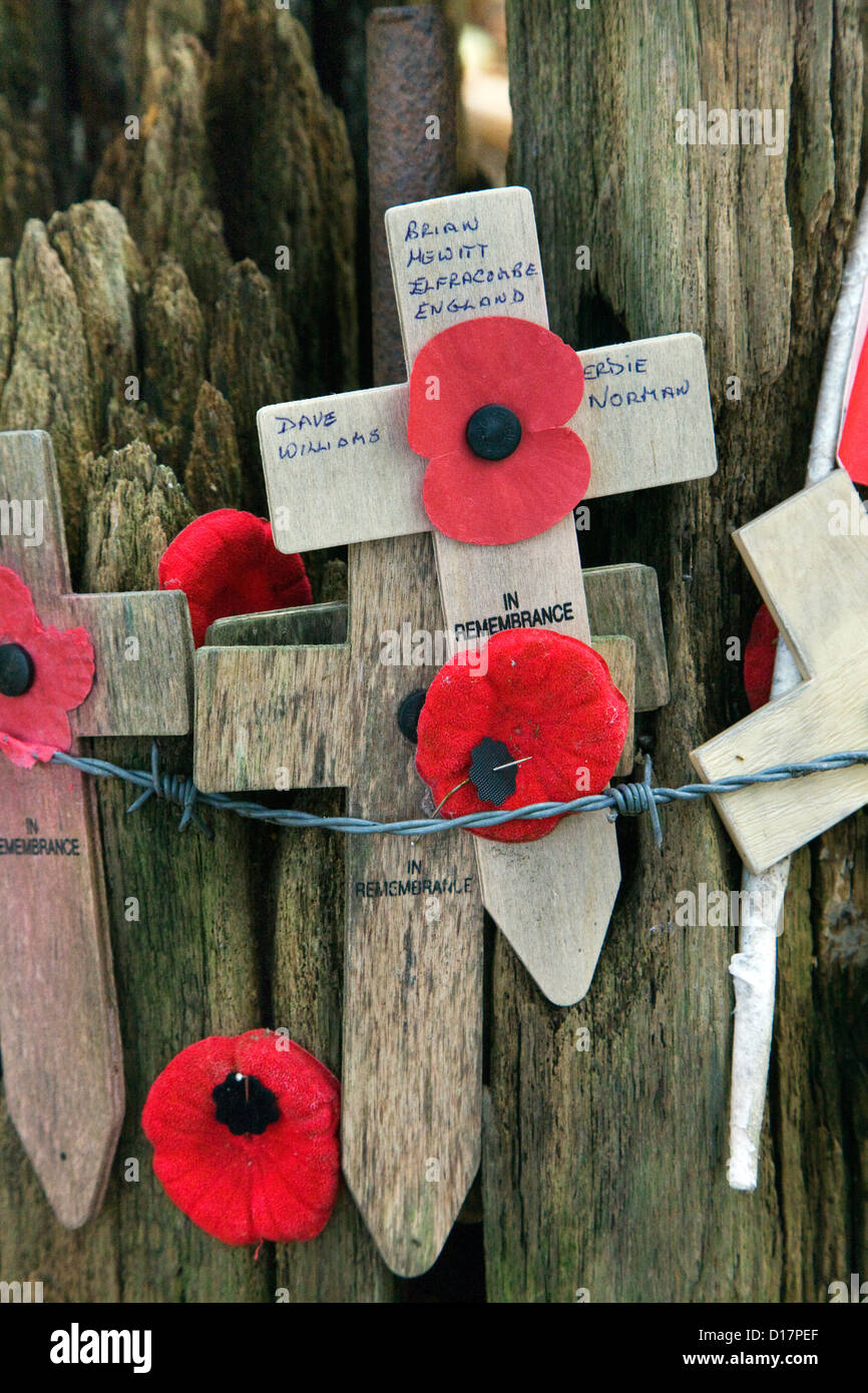 Original shell-blasted tree and WW1 crosses with poppies at Sanctuary Wood Museum Hill 62 at Zillebeke, West Flanders, - Stock Image