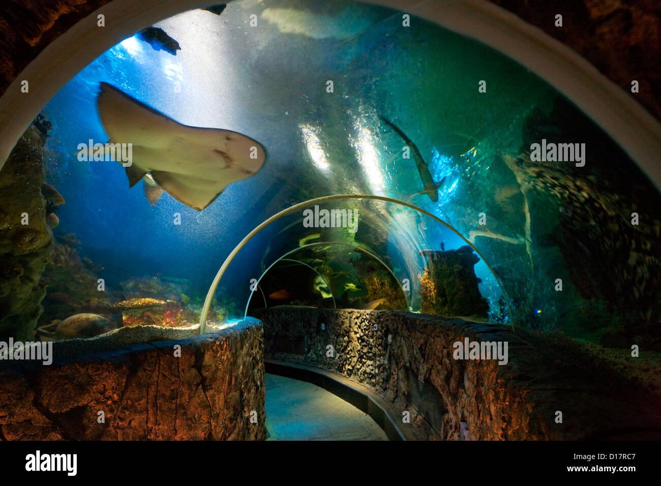 Underwater world at the Sealife centre aquarium at Blankenberge, Belgium - Stock Image