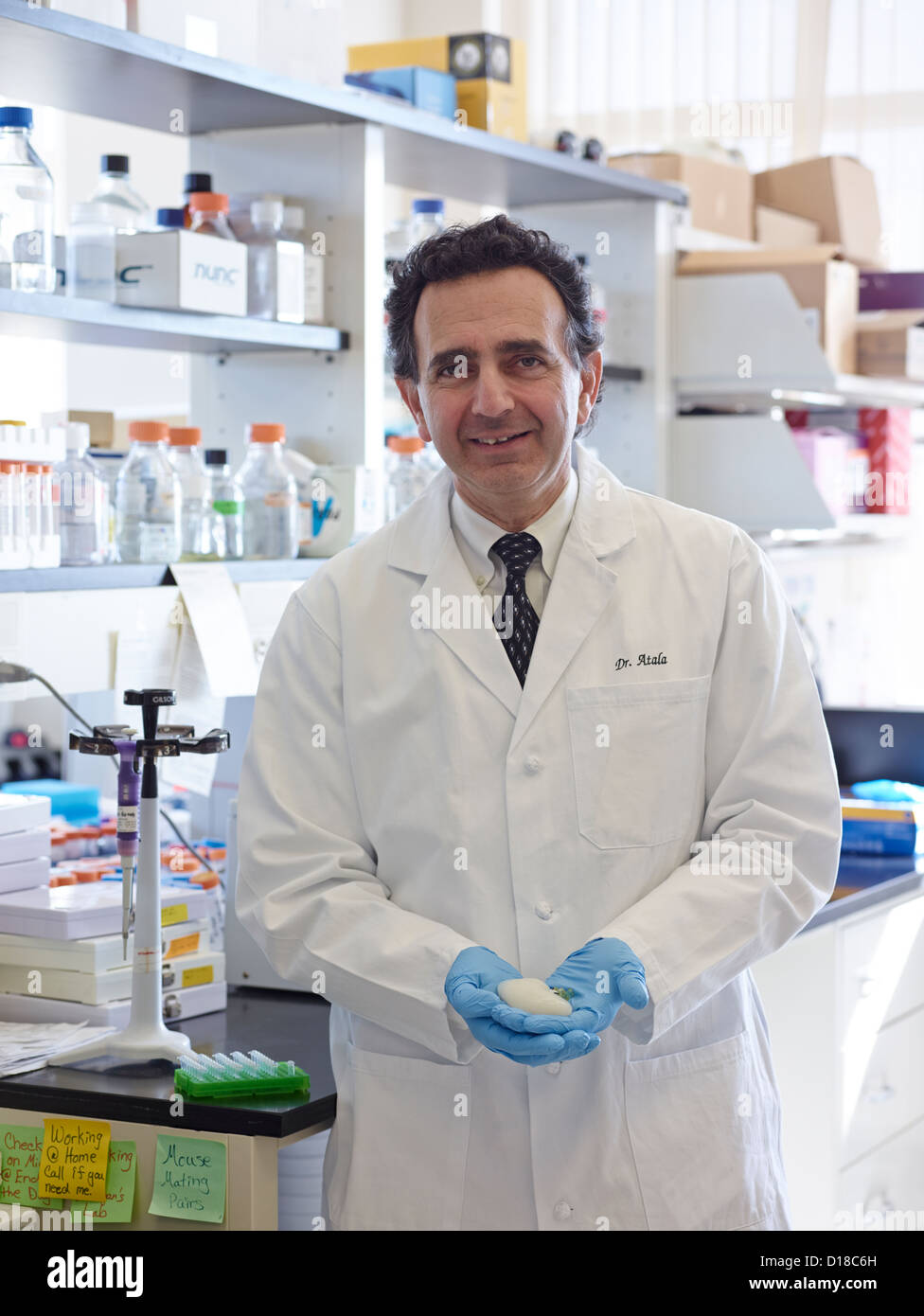 Doctor Anthony Atala, M.D.,Professor and Director of the Wake Forest Institute for Regenerative Medicine holding - Stock Image