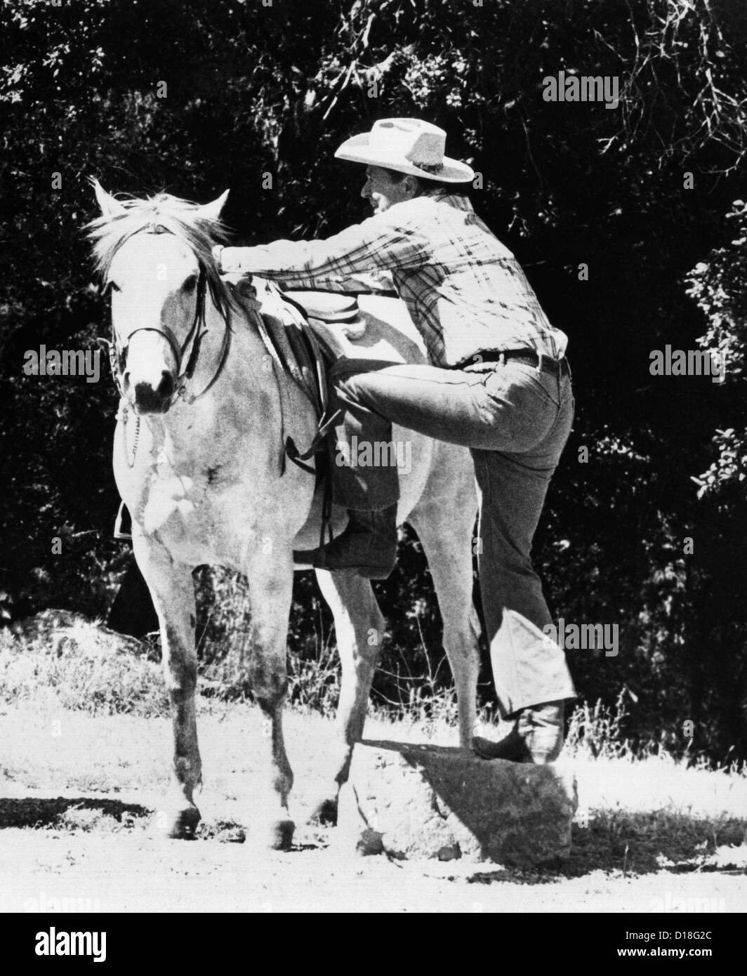 Republican Presidential candidate Ronald Reagan, getting into the saddle. July 1980. (CSU_ALPHA_440) CSU Archives/Everett - Stock Image