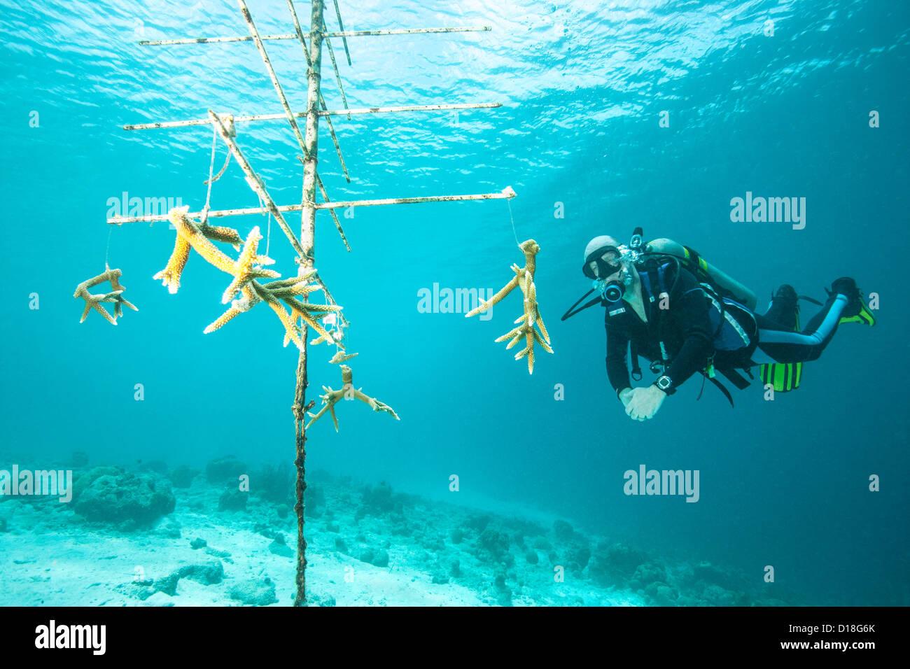 Diver examining underwater debris - Stock Image
