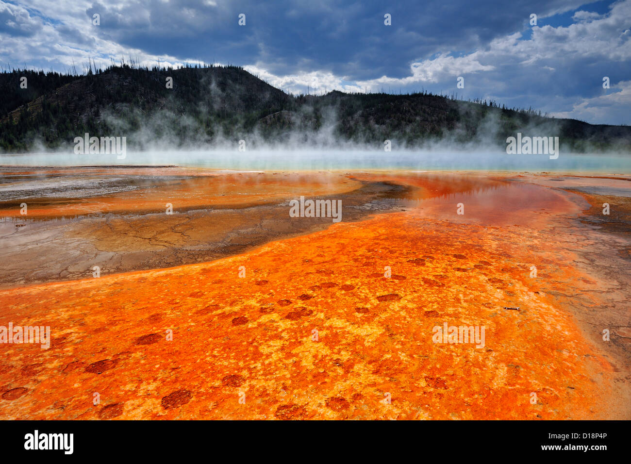 Midway Geyser Basin- Algae colonies at Grand Prismatic Spring, Yellowstone National Park, Wyoming, USA - Stock Image