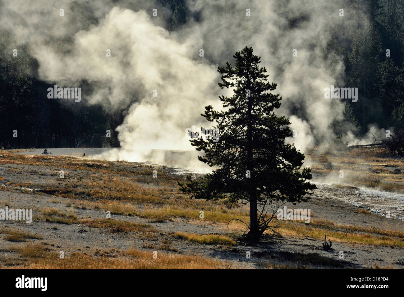 Steam vents along the Firehole River, Yellowstone National Park, Wyoming, USA - Stock Image