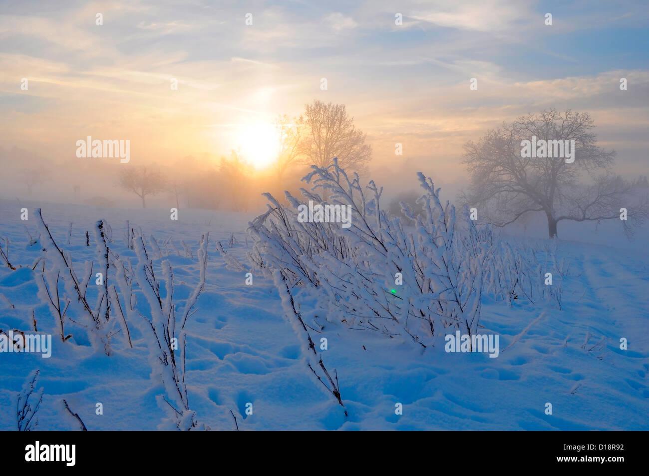 Sunrise with snow at Maulbronn, morning mood, fog with snow, dirt road with snow, sun with rays, snow, landscape, - Stock Image