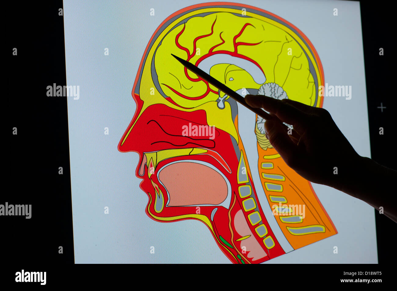 conceptual view of a hand with a pointer projected on monitor of a brain - Stock Image