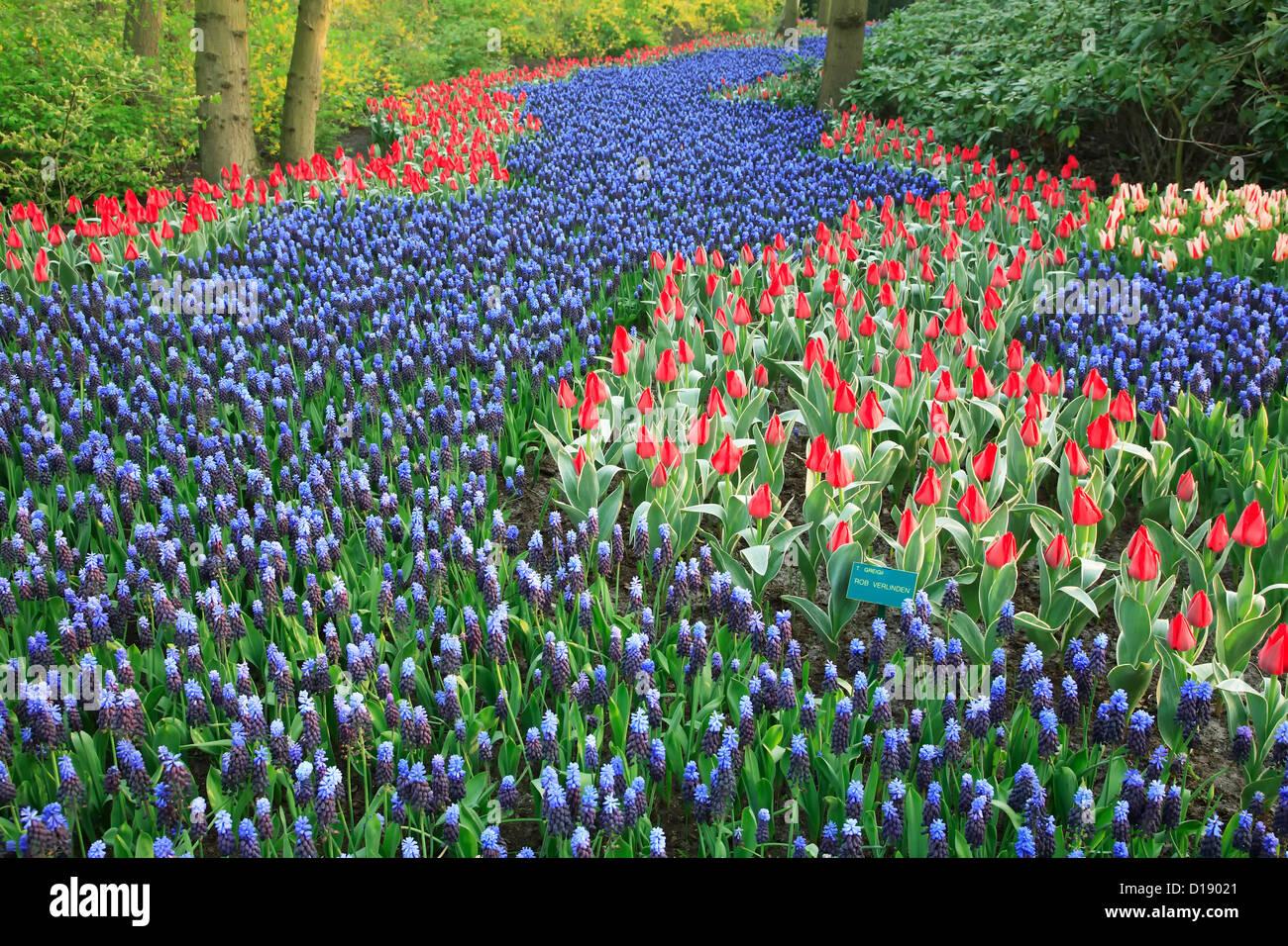 Gardens, Keukenhof Gardens, near Lisse, Netherlands - Stock Image