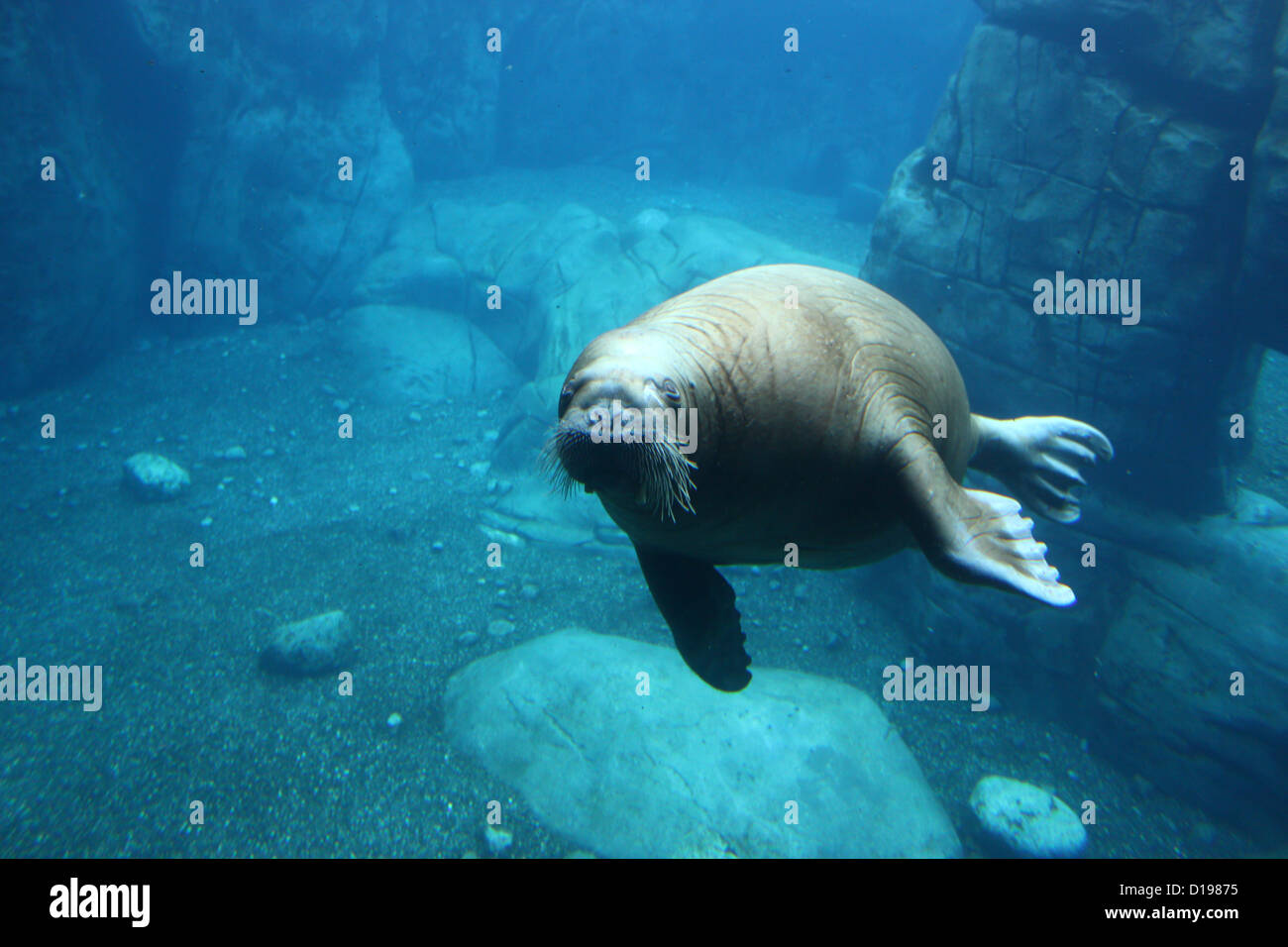 Hunt Walrus Stock Photos & Hunt Walrus Stock Images - Alamy