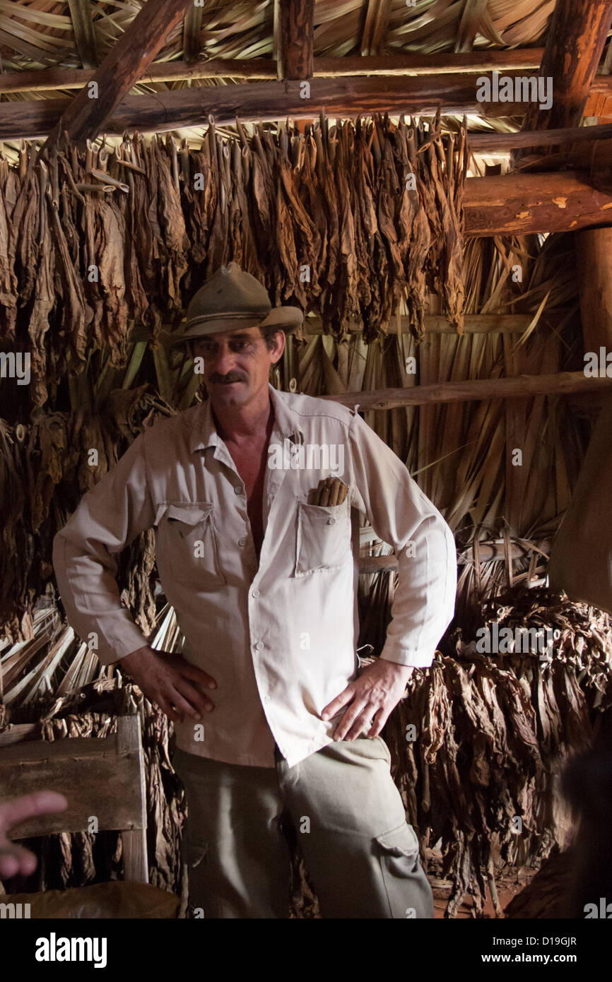 Tobacco farmer in front of drying tobacco leaves, Cuba - Stock Image