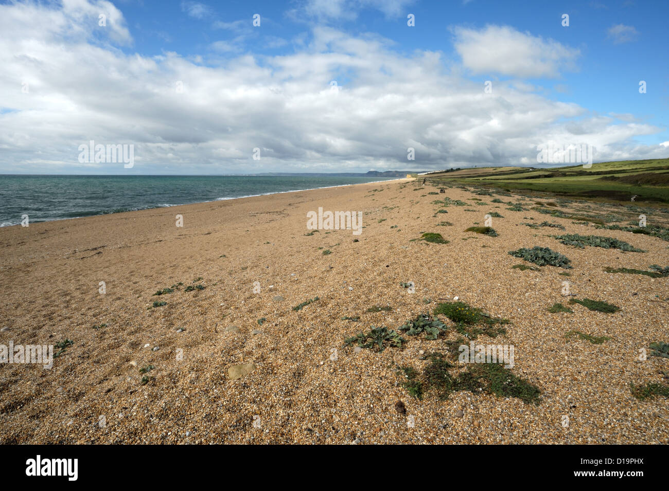 Chesil beach and sparse vegetation of kale, samphire and campion on a blustery fine autumn day - Stock Image