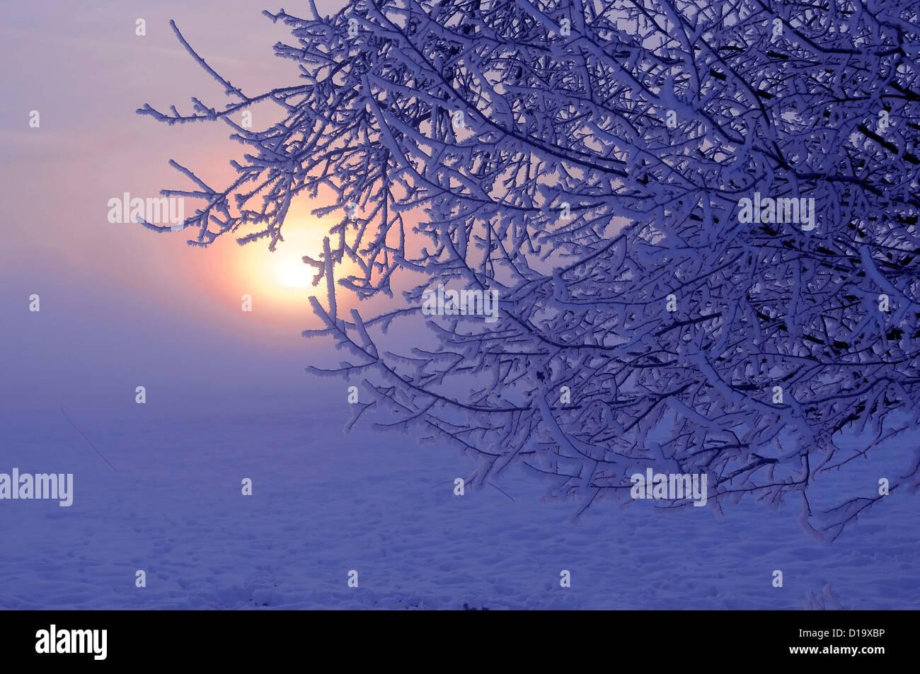 Germany Baden-Württemberg Maulbronn Enzkreis snow landscape winter landscape winter mood mood-piste snow December - Stock Image