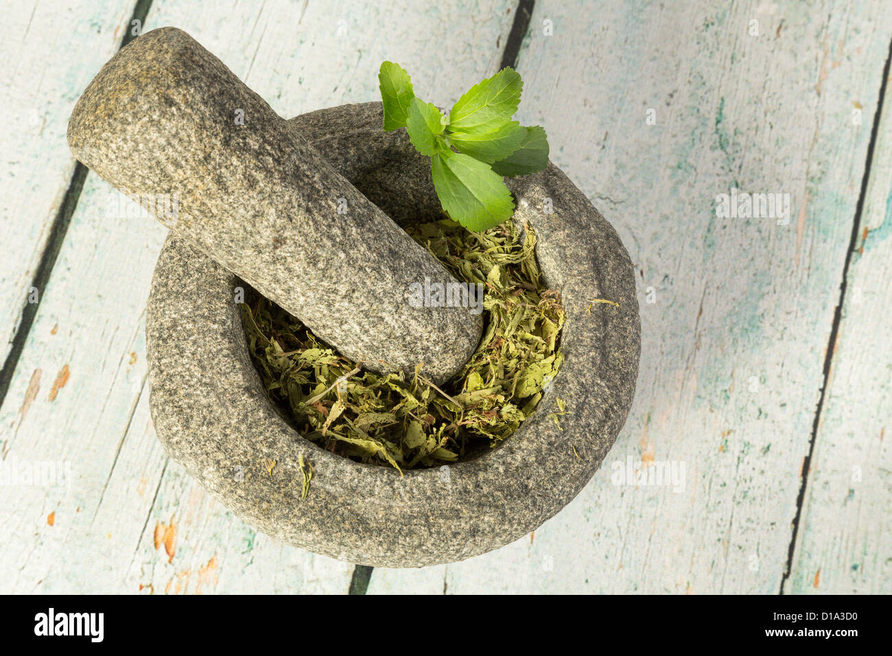 Healthy sugar substitute dried stevia in mortar - Stock Image