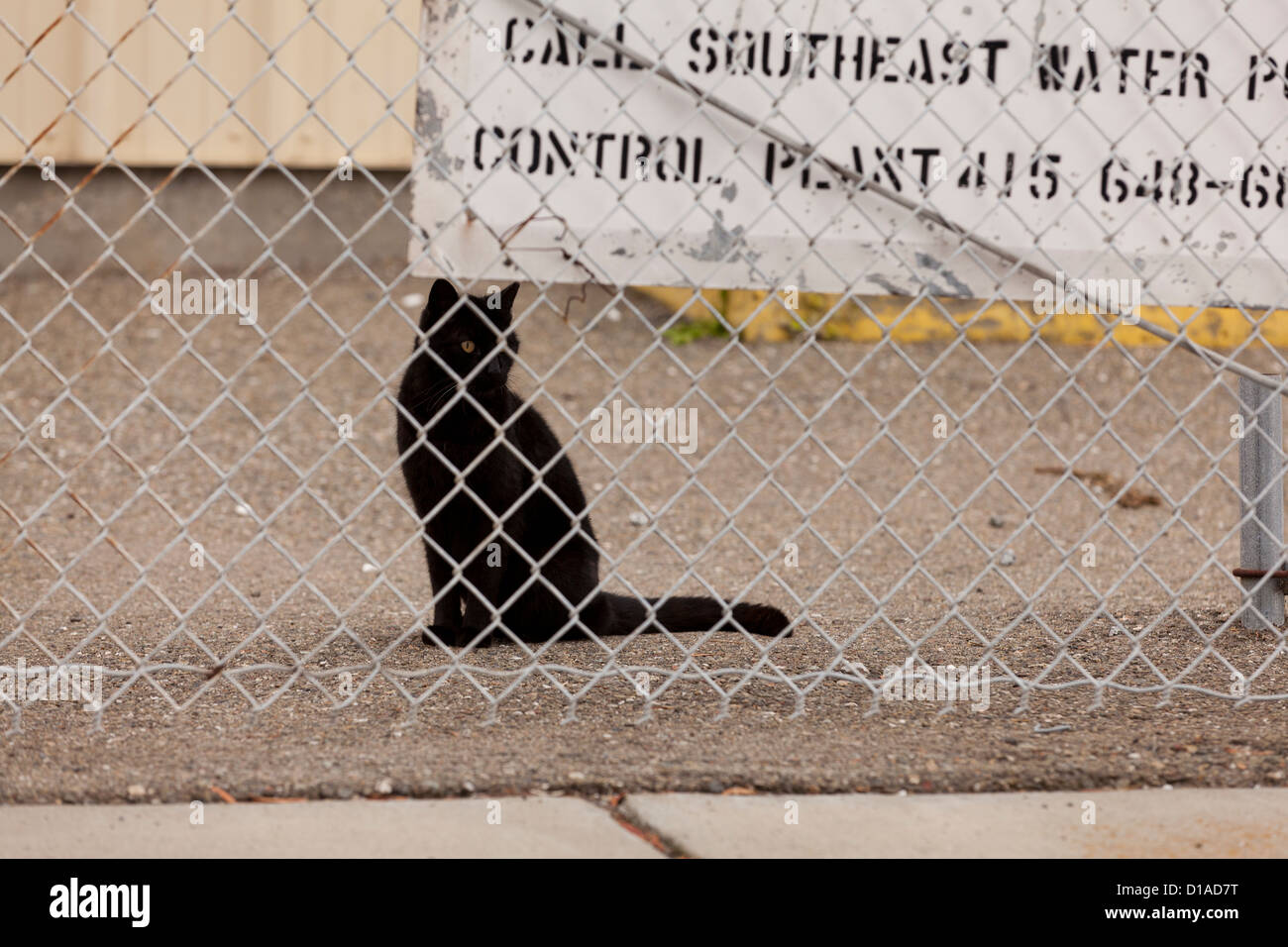 Black cat sitting behind chain link fence - Stock Image