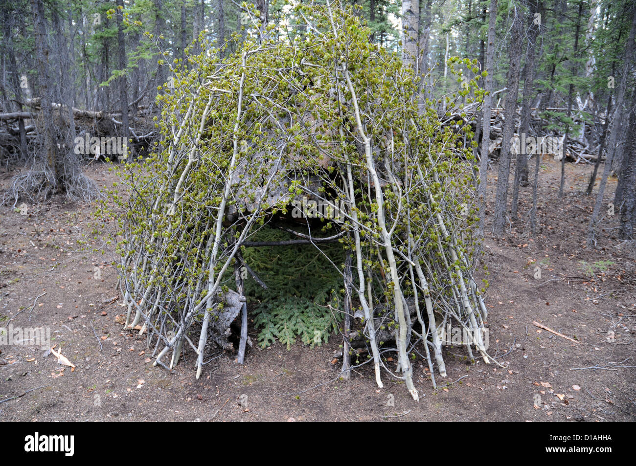 """An example of a traditional indigenous """"chastity hut"""" located in the Champagne-Aishihik First Nation town of Champagne, Stock Photo"""
